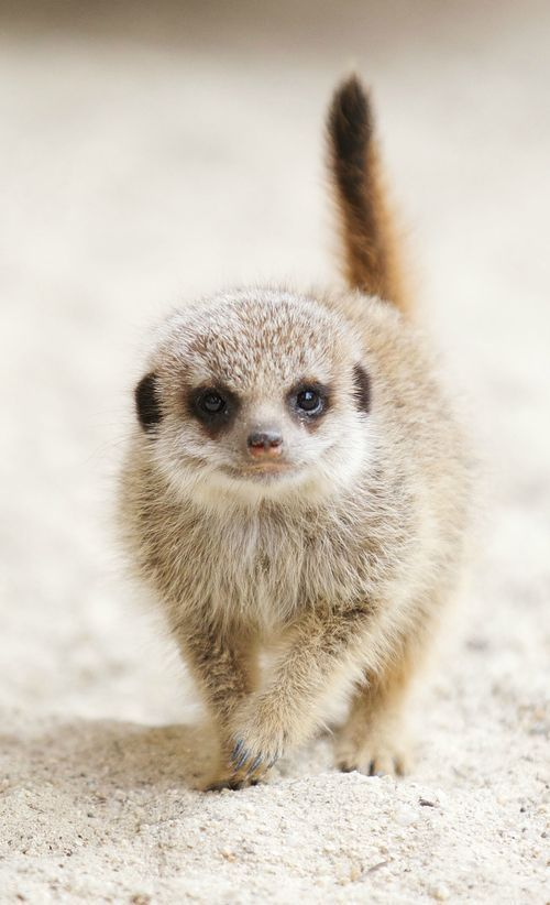 Zoo Borns. all the baby animal cuteness you could want!