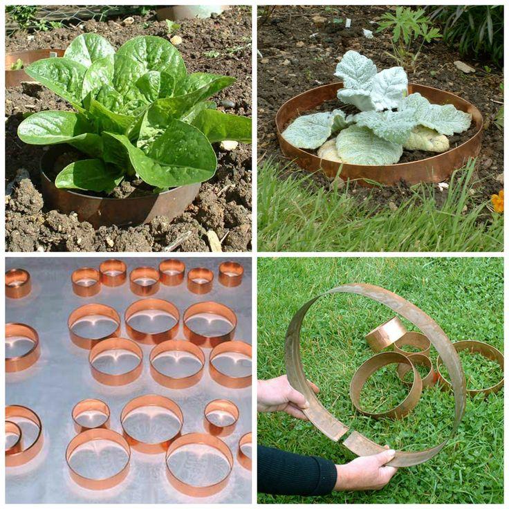 Miedź stanowi dla ślimaków barierę, dzięki której zachowasz zdrowe rośliny i nie skrzywdzisz ślimaków.