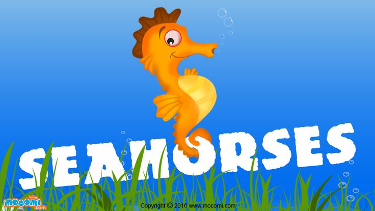 Seahorse Facts and Information - Read here 14 Interesting Facts about Seahorses. Read More GK facts for Kids, visit: http://mocomi.com/learn/general-knowledge/