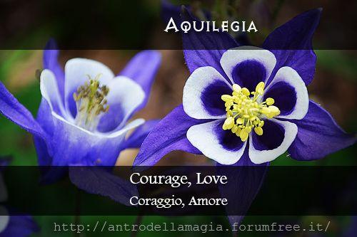 Magical Uses of Aquilegia: Courage, Love  Usi Magici dell'Aquilegia: Coraggio, Amore || L'antro della magia http://antrodellamagia.forumfree.it/?t=56595746