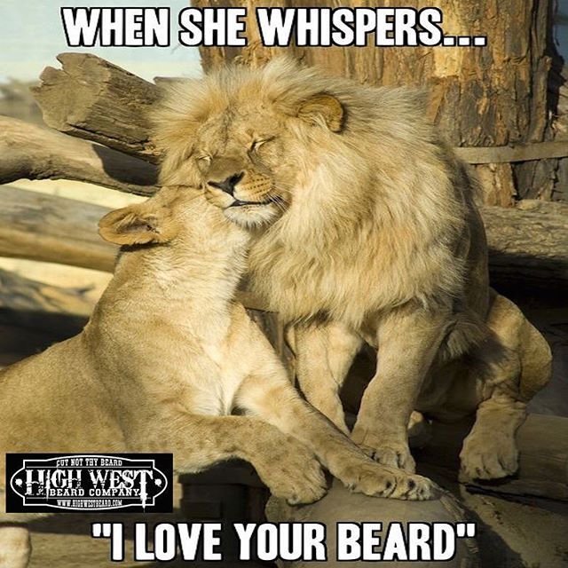 Some say a lion's strength is determined by the size of his mane. Stand out from the crowd with the best man mane you can produce. This requires only the best products you can put in your beard. Visit the link ion the bio and subscribe to save 30%  #bearded #scentofthemonth #beard #beards #badassbeards #beardbox #beardkit #ultimatebeardbox #beardedbrotherhood #beardvitamin #beardedbrothers #beardon #highwestbeard #hwb #mustachewax #beardoil #beardbalm #facefur #facialhair #beardedvillains…