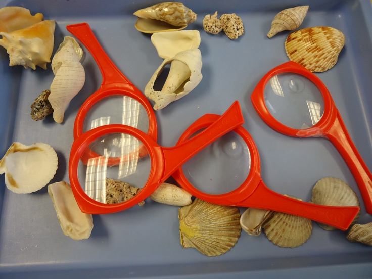 Under the sea: science activity.  We let children explore shells in a variety of ways, in our sand table, and at our science table with magnifying glasses.