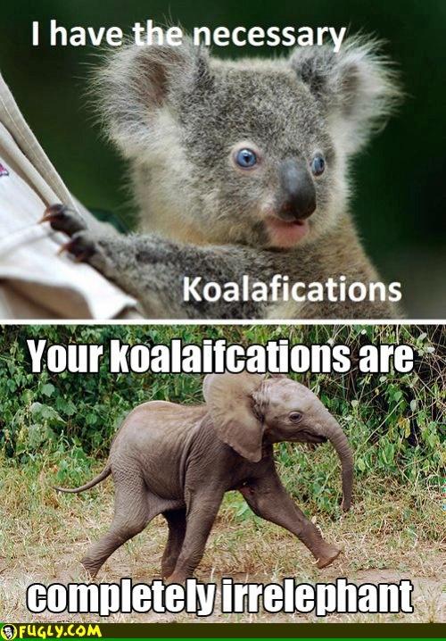 Irrelephant Koalafications: Giggle, Animals, Koalafications, Funny Stuff, Funnies, Humor, Animal Puns