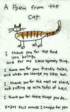My Mojito Cat! He must be quite thankful... he brings us many gifts!
