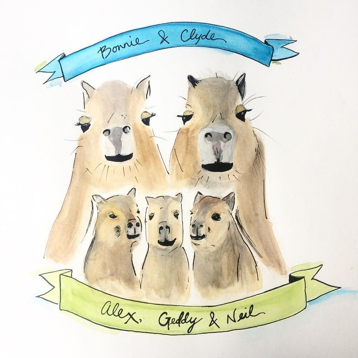 """@clancysue)on Instagram: """"Bonnie & Clyde welcome Alex, Geddy & Neil!  Coming tomorrow to @society6 #highpark #capybara #capybabies"""