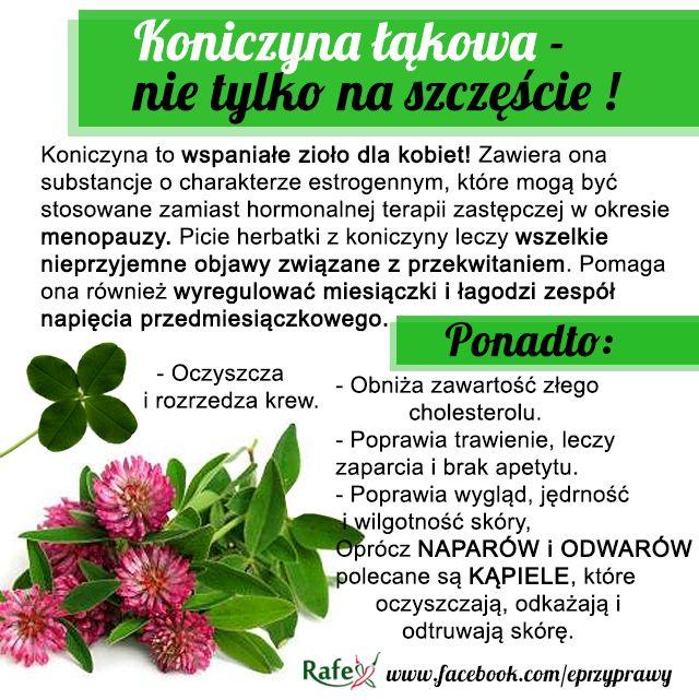 Blog o zdrowym i naturalnym odżywianiu, ziołach, przyprawach i roślinach.: KONICZYNA ŁĄKOWA - nie tylko na szczęście!