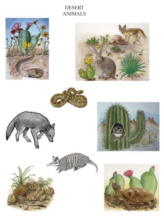 Desert Animals to include in your desert habitat diorama.