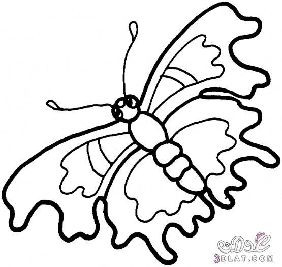 صور فراشات للتلوين فراشات روعه للتلوين هات الوانك وتعال Butterfly Coloring Page Animal Coloring Pages Coloring Pages