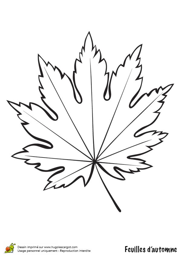 1000 images about coloriages dessins d 39 automne on pinterest belle mandalas and autumn leaves - Feuille de vigne dessin ...