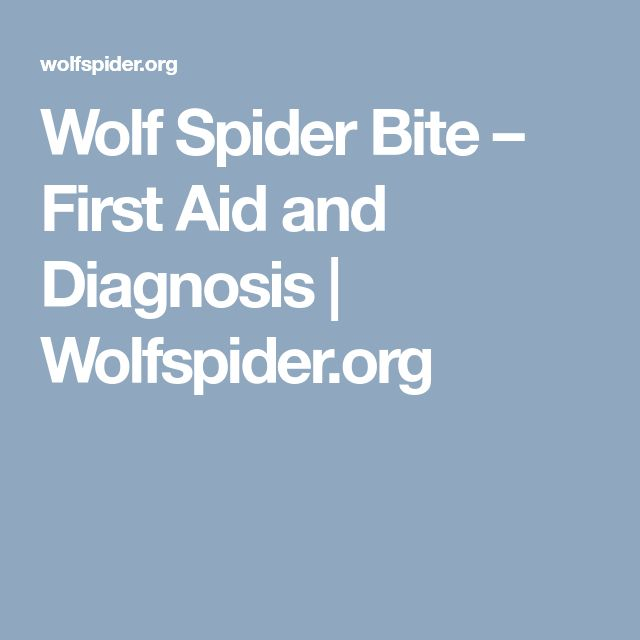 Wolf Spider Bite – First Aid and Diagnosis | Wolfspider.org