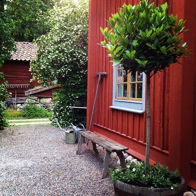 """416 gilla-markeringar, 22 kommentarer - P-O Jerner (@perolofjerner) på Instagram: """"Jaha, middag kanske... #trädgård #garden"""""""