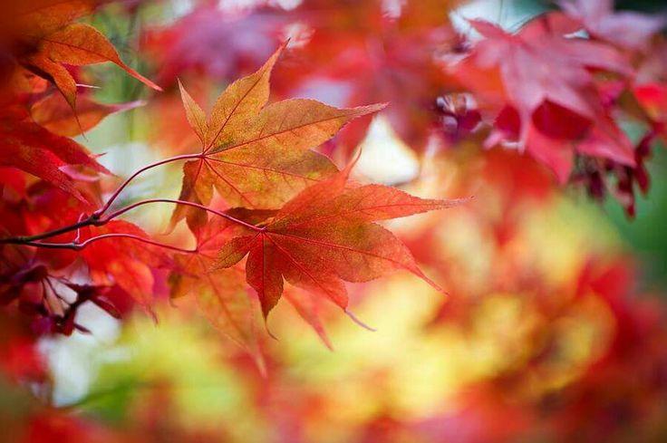E poi improvvisamente  alcune persone  ti cadono dal cuore... così come le foglie...cadono  dagli alberi...