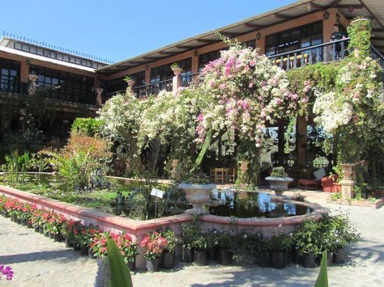 1000 images about puerto vallarta mexico cruise port - Puerto vallarta botanical gardens ...