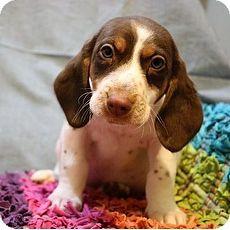 Percival | Goofy Foot Rescue - Southington CT | Southington, Connecticut | Pets.Overstock.com
