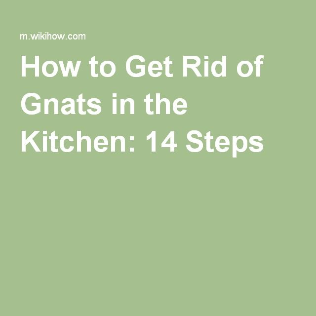 oltre 1000 idee su gnats in kitchen su pinterest