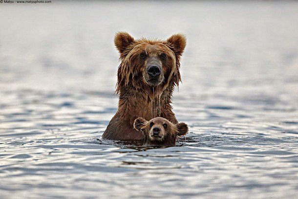 Precious Parenting Moments In The Animal Kingdom