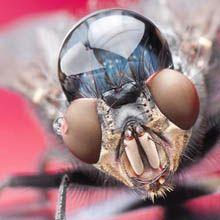 O fotógrafo israelense Yoav Reinshtein clica incríveis fotografias macro de vários insetos com gotas de água sobra as suas cabeças.