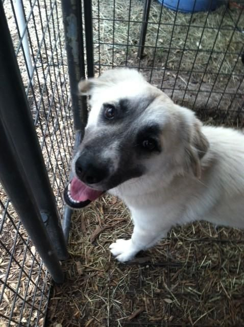 126 Best Adoptable Animals In Texas Images On Pinterest