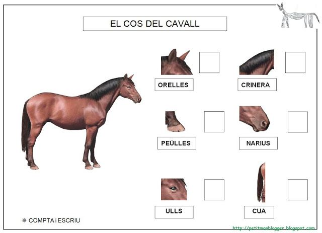 CAVALL projecte - Petitmón Recursos - Picasa Web Albums