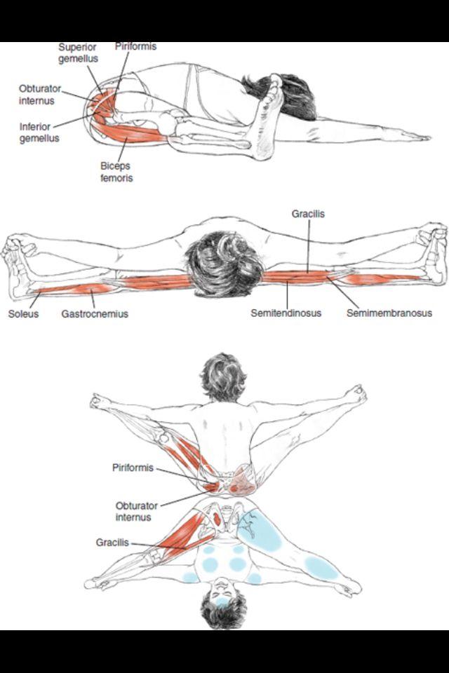87 best Yoga Anatomy images on Pinterest | Stretching, Yoga poses ...