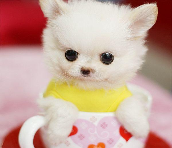 23 Miniature Pups In Cups