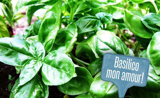 Basilico in vaso: tutti i segreti per mantenerlo in vita più a lungo! | Giardinieri in affitto