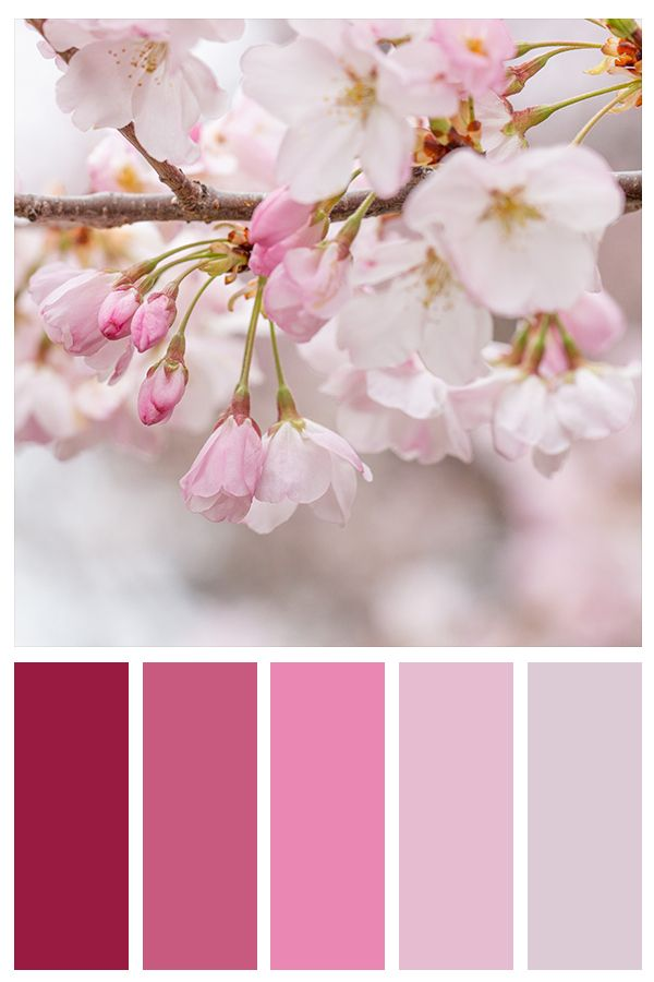 Pink Cherry Blossoms Gallery Wall Collage Set Of 3 Photo Etsy Pantone Color Colour Pallete Color Schemes