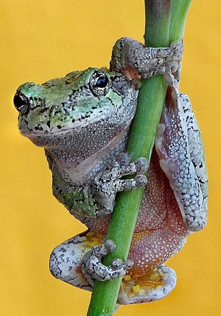 Frog Photo by Don Tayor via flickr