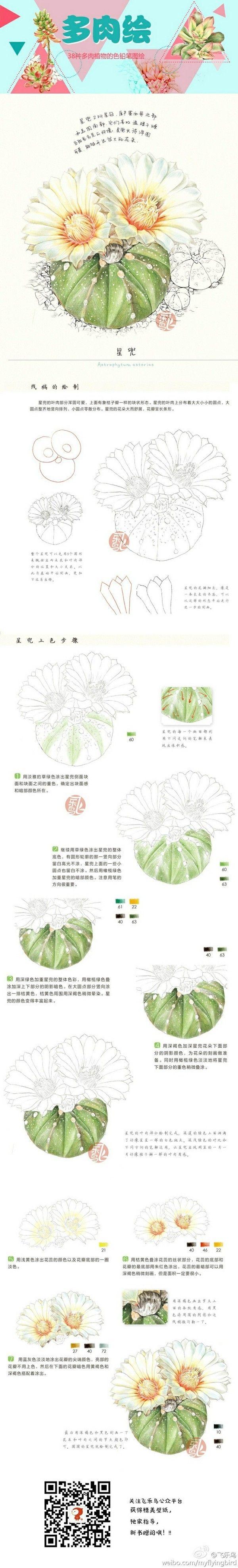 Watercolor or colored pencil succulent