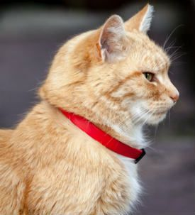 17 Best Images About More Orange Cats On Pinterest