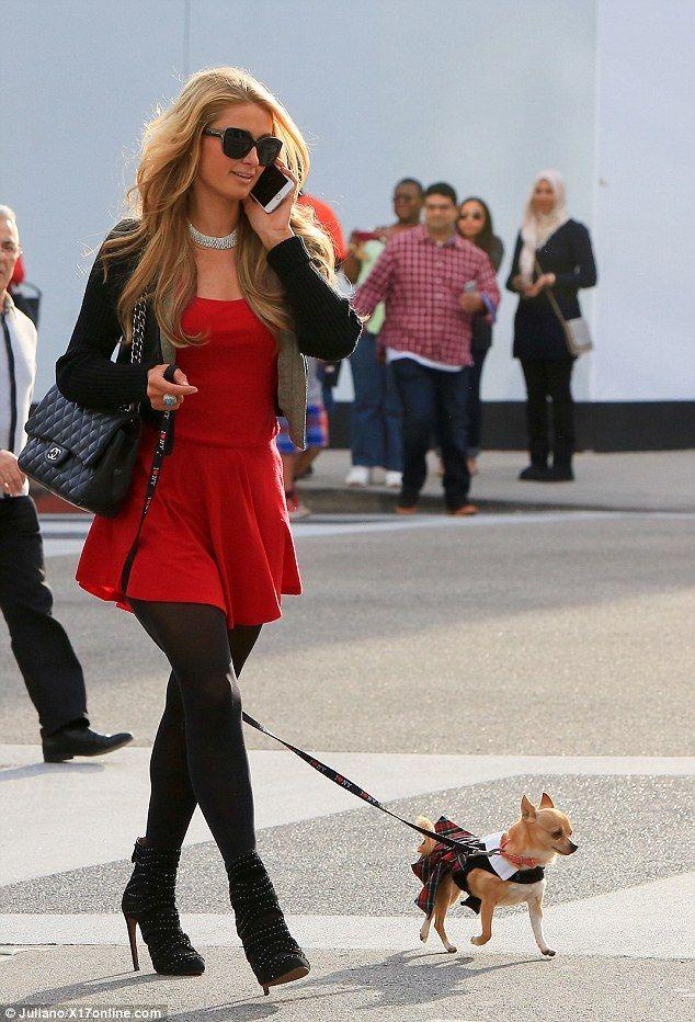 Paris Hilton dresses her tiny pet Chihuahua in  a tartan kilt and collar