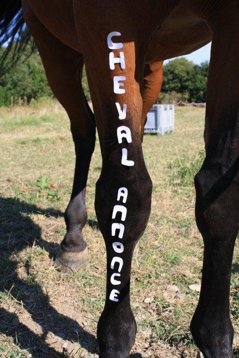 Il me fait une belle jambe ce concours ! #ca #chevalannonce #coucours #cheval #equitation