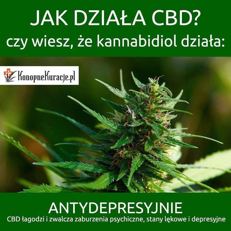 Jak działa CBD?  Czy wiesz, że kannabidiol działa: Antydepresyjnie. #CBD łagodzi i zwalcza zaburzenia psychiczne, stany lękowe i depresyjne.  #cbd #olejkicbd #olejekcbd #olejcbd #konopie #konopnekuracje #konsultacje #zdrowie #warszawa #polska