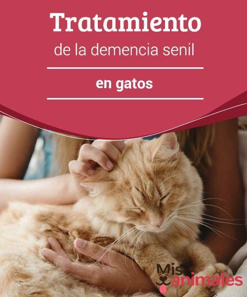 Tratamiento enfermedad demencia senil