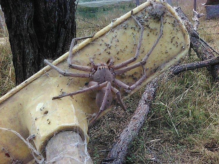 Gerade erst hatten wir uns von der Spinne erholt, die eine ausgewachsene Maus durch die Gegend trug, da kommt das Internetschon mit dem
