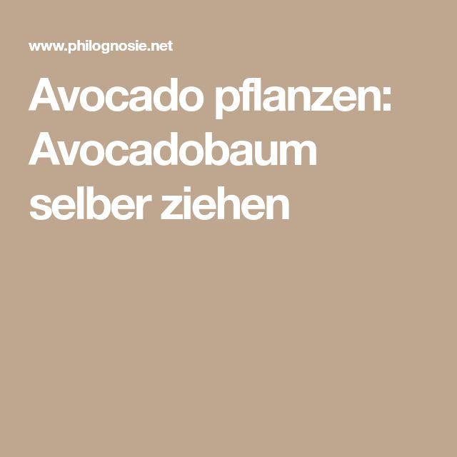die besten 25 avocadobaum ideen auf pinterest advocado. Black Bedroom Furniture Sets. Home Design Ideas