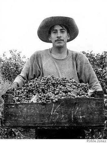 Napa Valley grape harvest, 1956