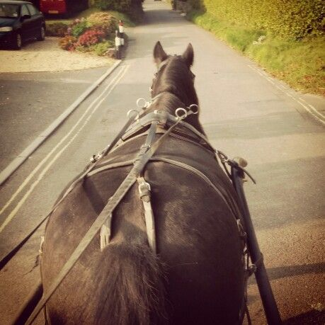 Lazy Sunday Morning with the boy #fellpony #carriagedriving #homeiswherethehorseis