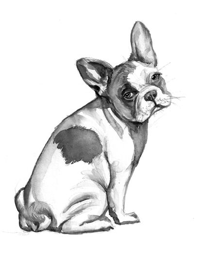 The Fundamental of Drawing Animals by duncan smith, via Behance