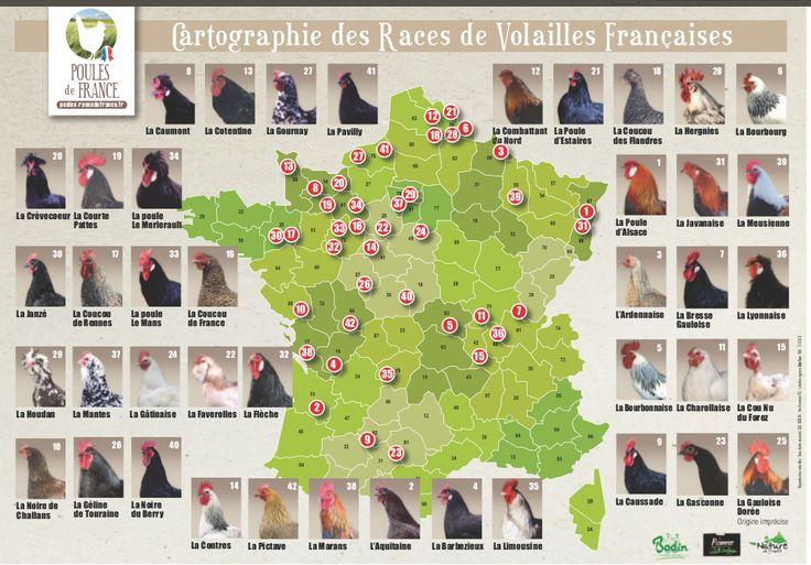 Carte de France et fiches des différentes races de poules