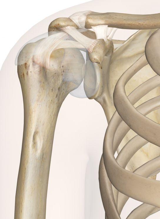 Shoulder Joint Anatomy-Inner body website has detailed descriptions of joints bones etc!