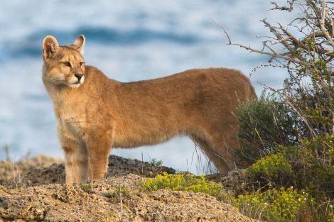#Patagonia #wildlife: #animals to #spot on adventure #holidays
