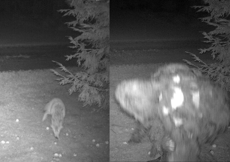 Image detail for -... bigfoot team which was investigating a possible bigfoot sighting in
