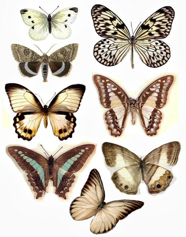 FREE Butterflies - By Lisa Gregory