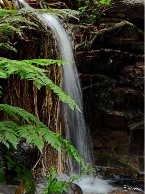Kirstenbosch, (c) Florescence