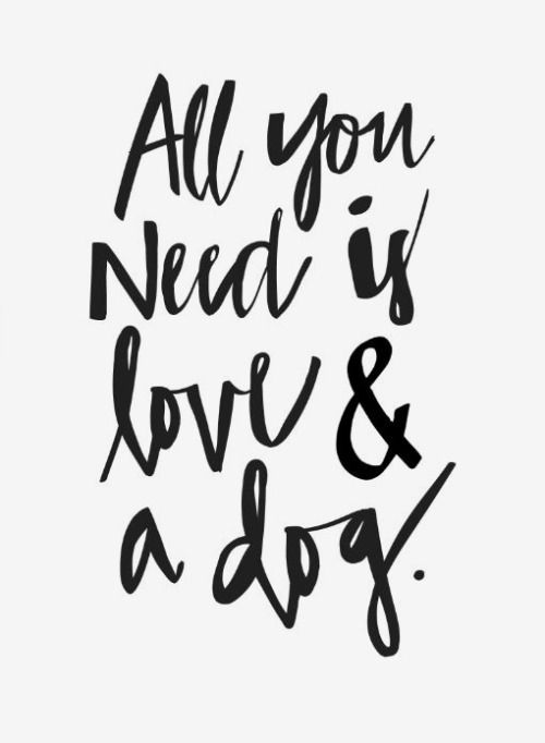 All you need is love & a dog. Our thoughts exactly.