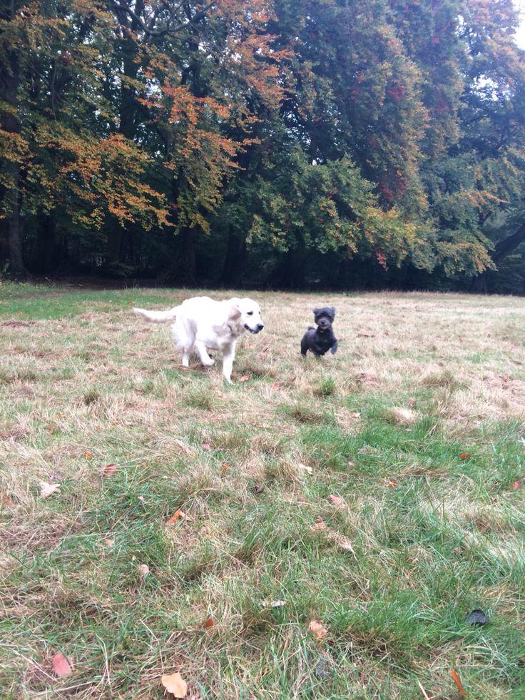 Dogs on the run-October-autumn-Denmark-near Copenhagen