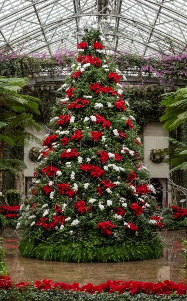 Christmas at Longwood Gardens 2016