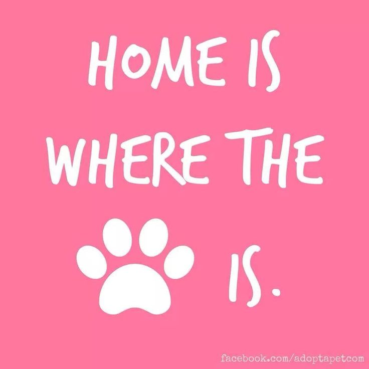 Home is where the PAW is