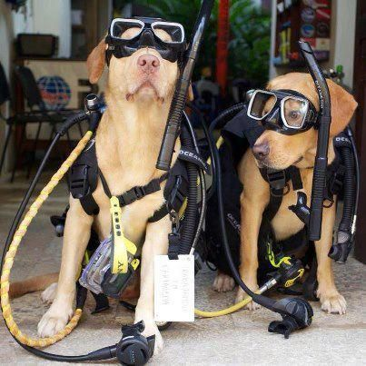 Scuba Diver Dogs - for no other reason than they're just cute. Who doesn't love cute dogs in scuba gear? www.watchyourselves.com
